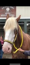 New Mounted 2 Zeep